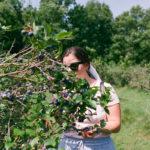 Picking blueberries outside